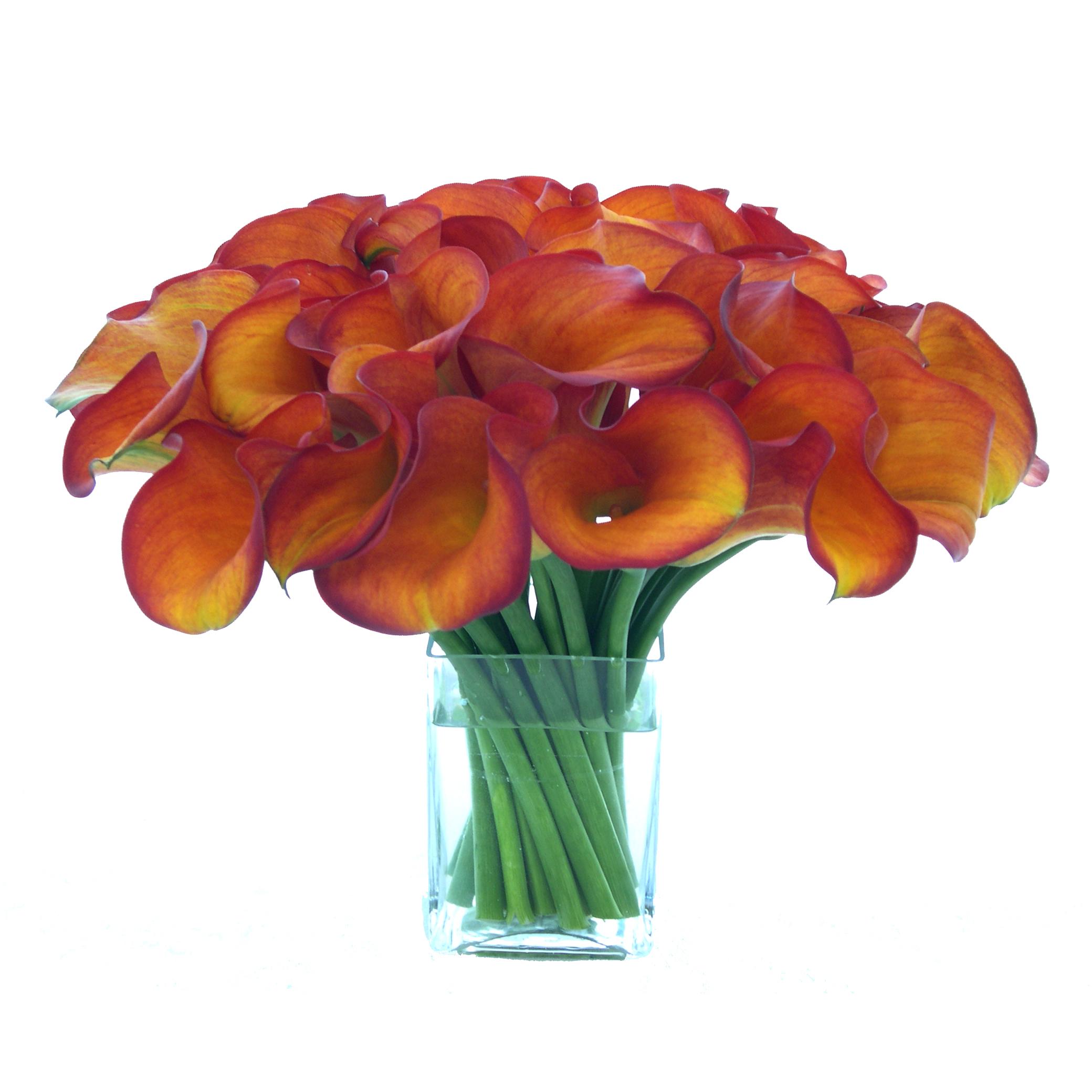 Orange Mini Callas