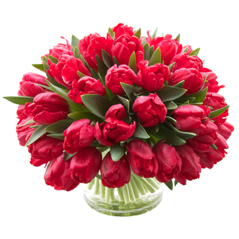 Rosie Red Parrot Tulips