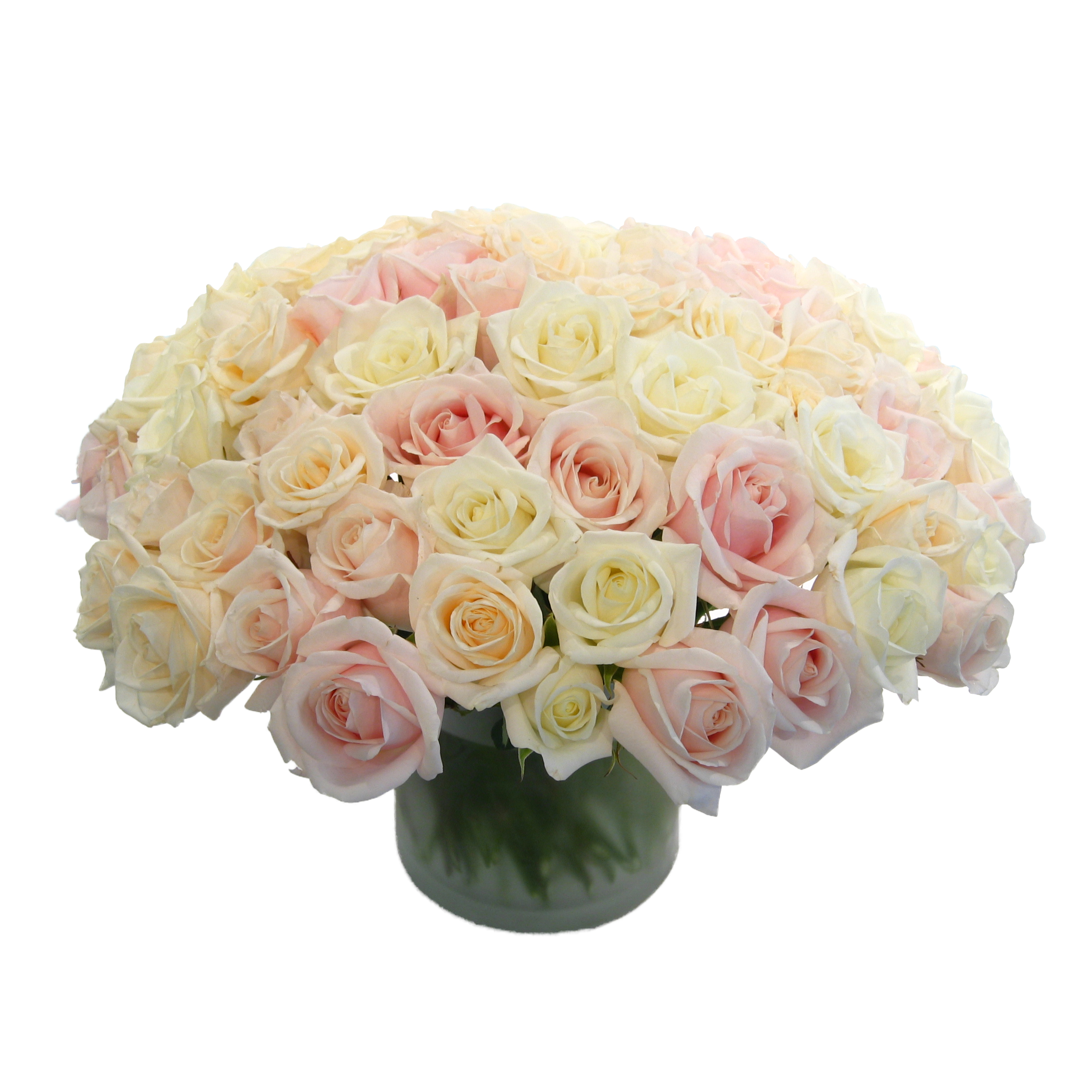 Peaches and Cream Rose Composition