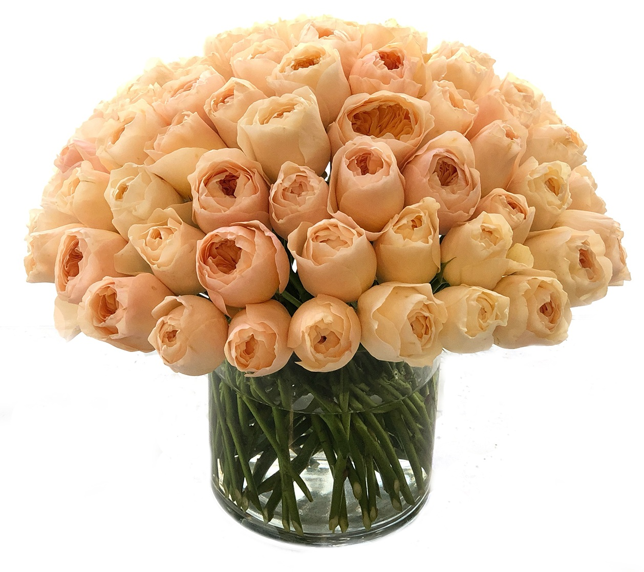 Apricot Garden Roses