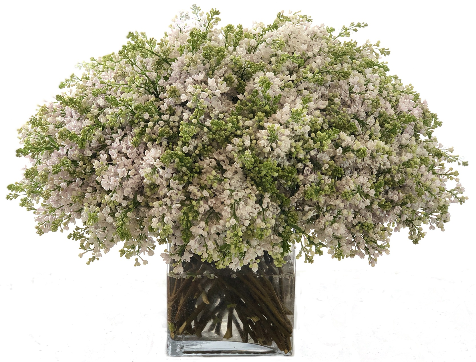Luxe White Lilac starting at $550