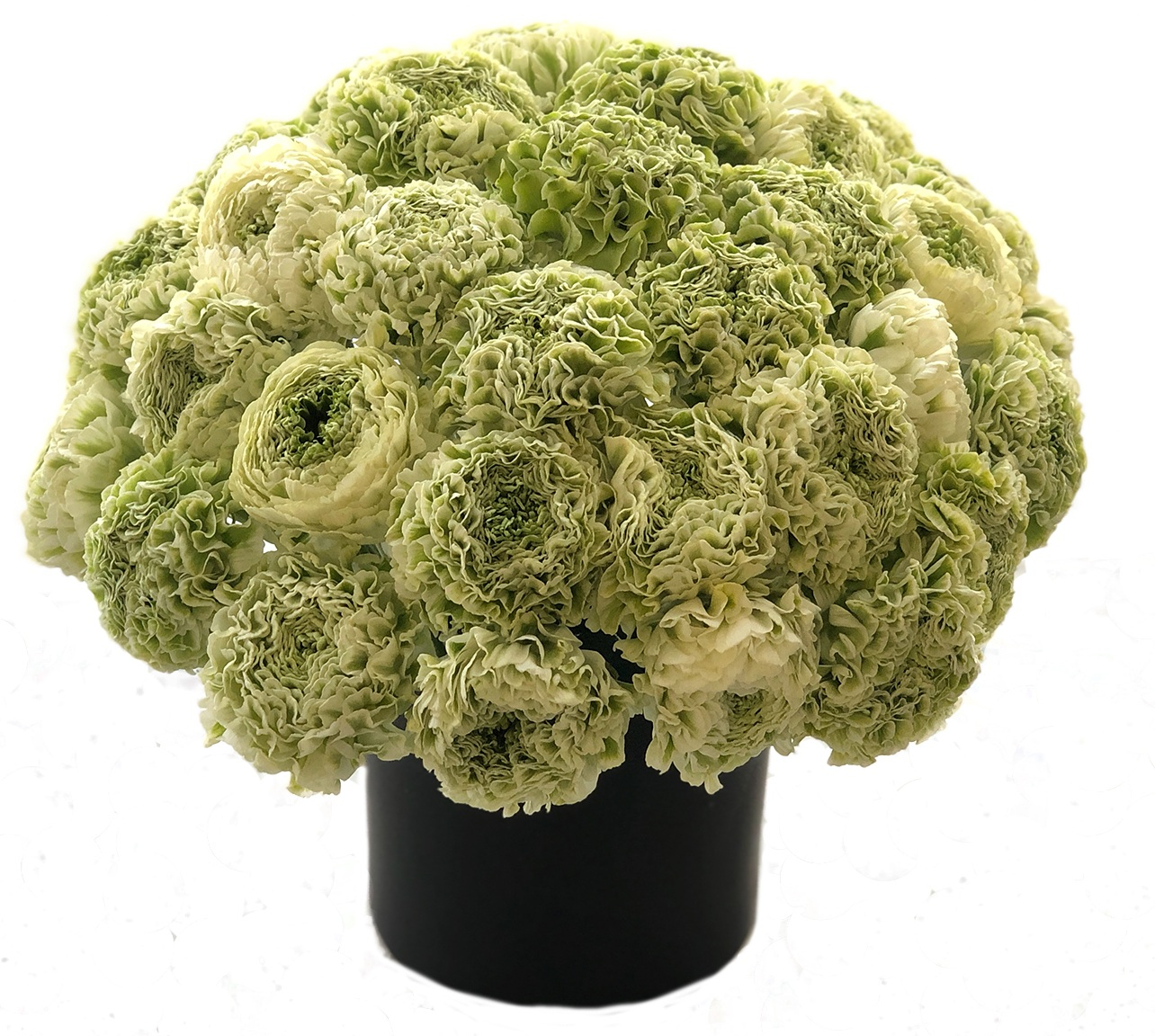 Luxe Novelty Ranunculus starting at $550