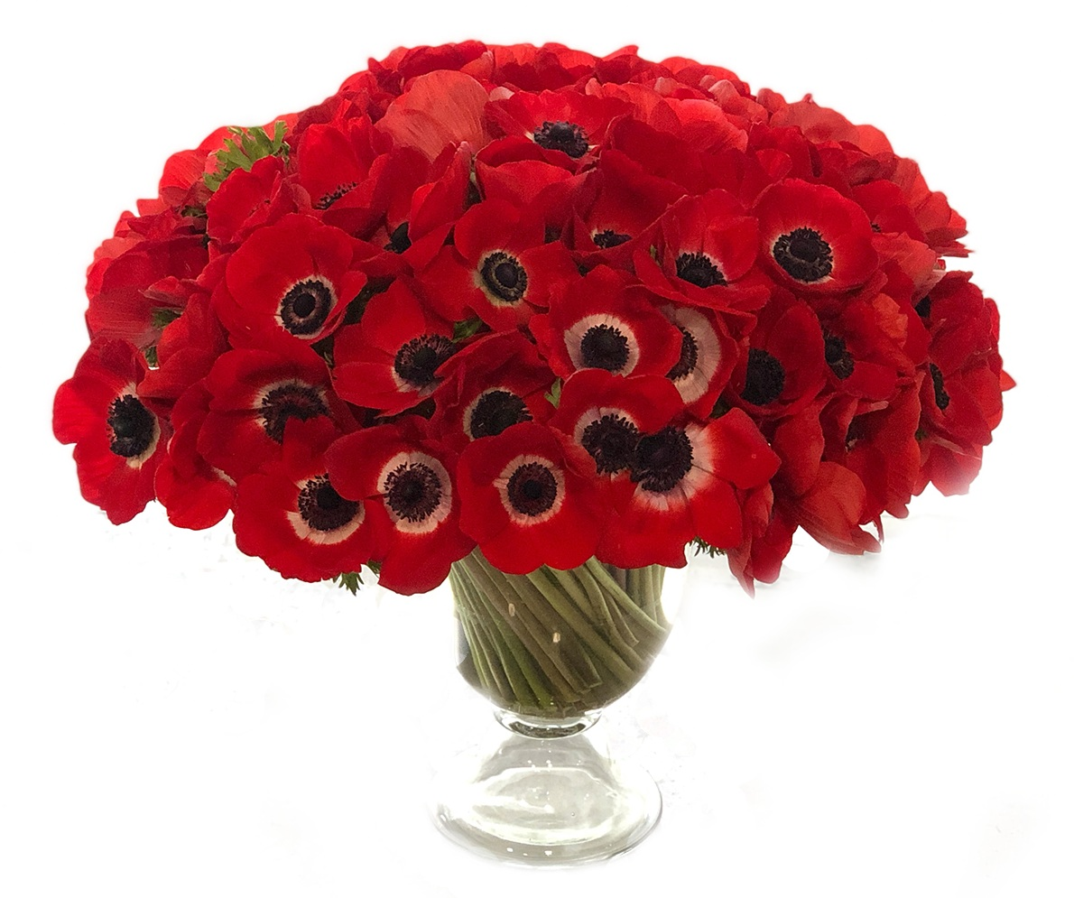 Luxe Red Anemones starting at $500