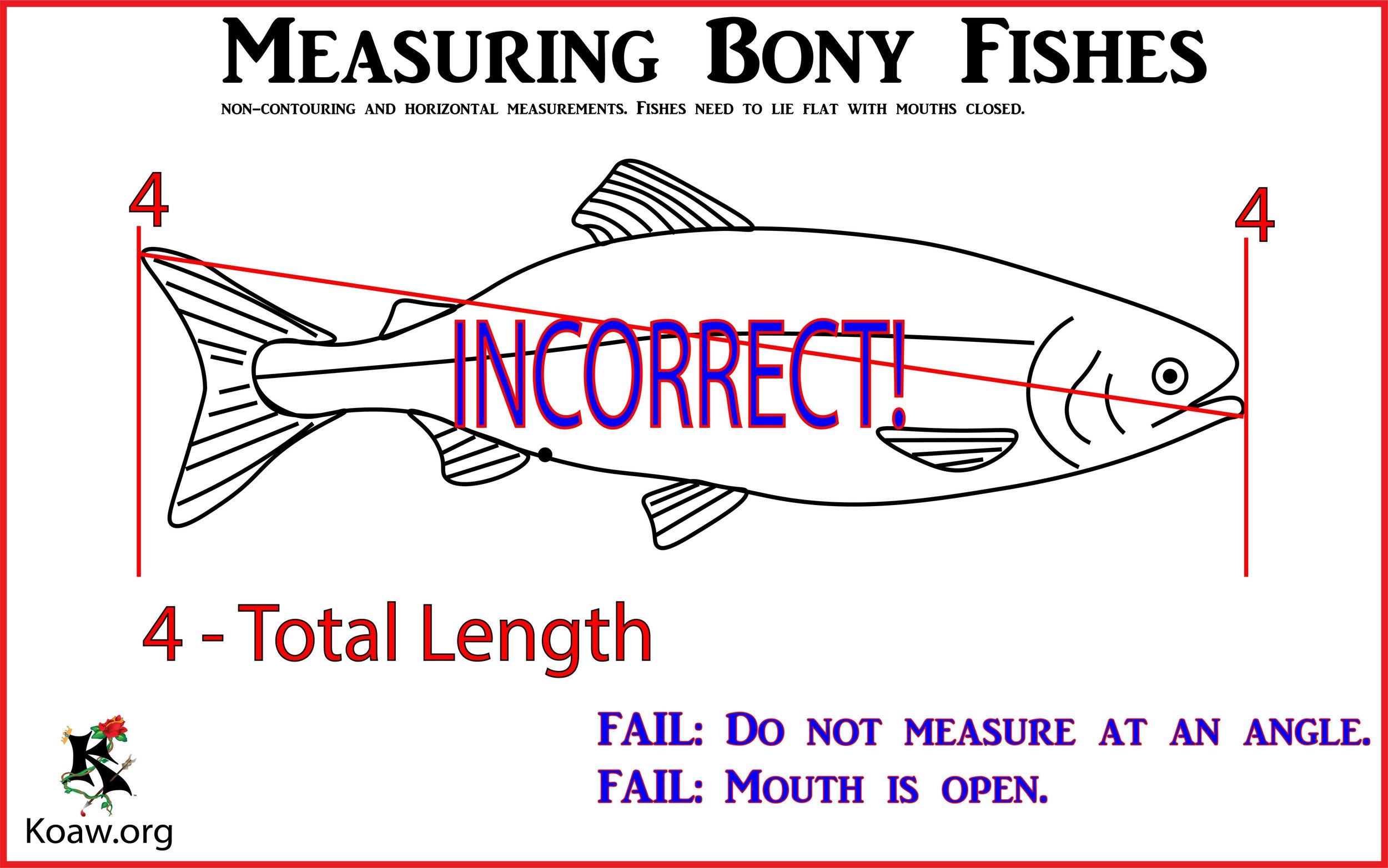 Incorrect Measurement - Illustration by Koaw