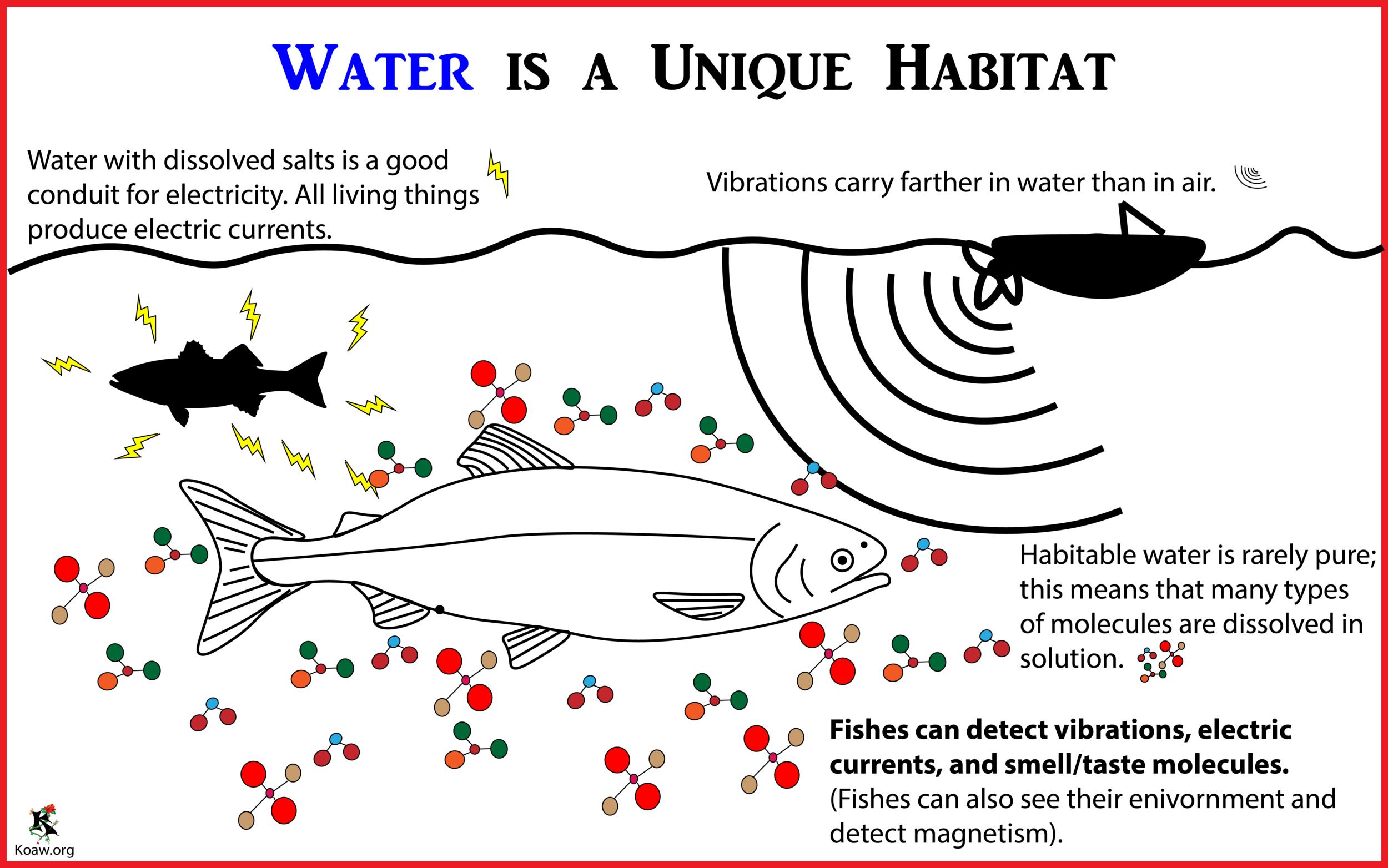 Water is a Unique Habitat