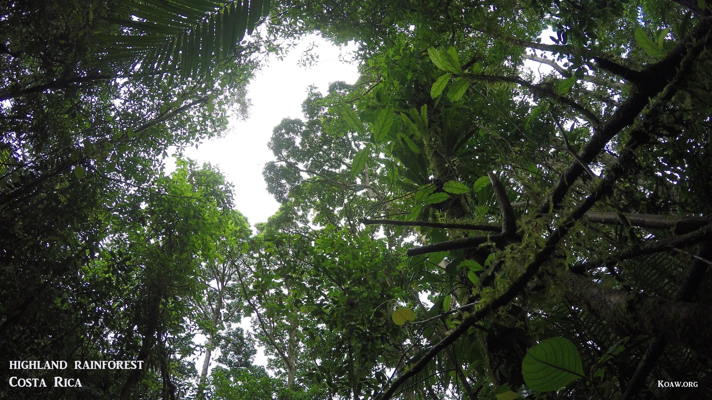 Highland Rainforest Cerro Chato