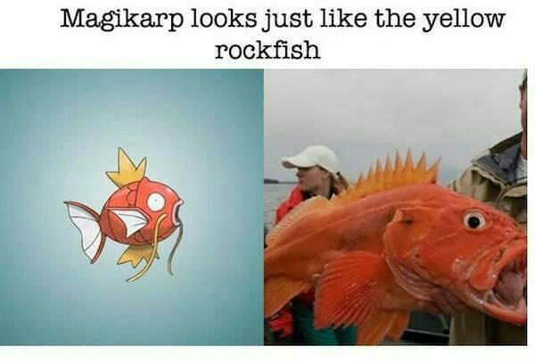 Magikarp compared to yelloweye rockfish - nope, sorry buddy.