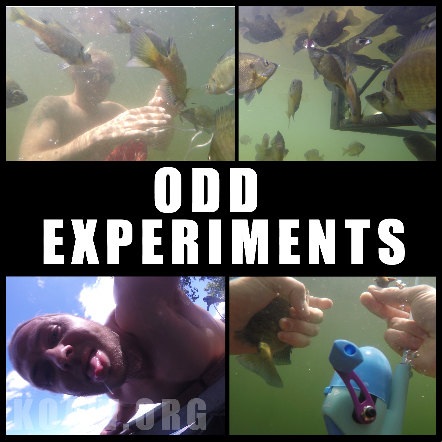 experiments koaw org2.png