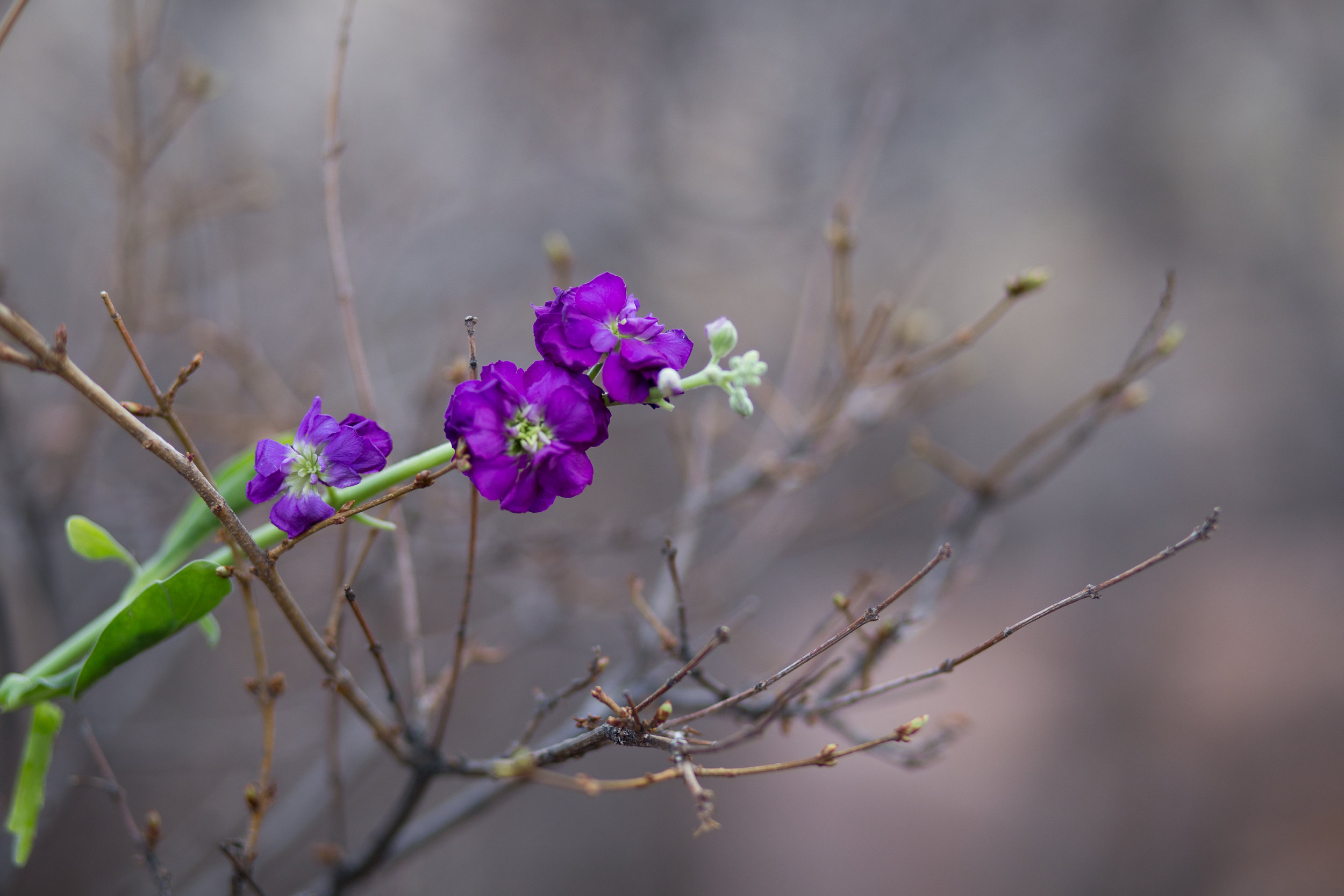 purple flower with branches