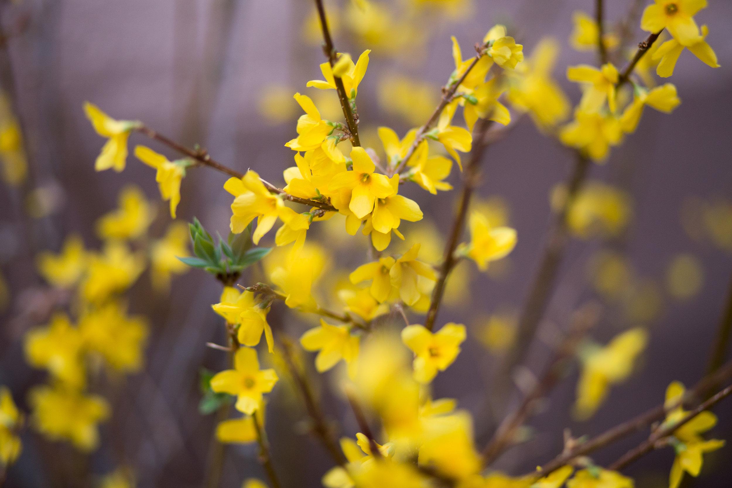 yellow flowers creative photography encouragement