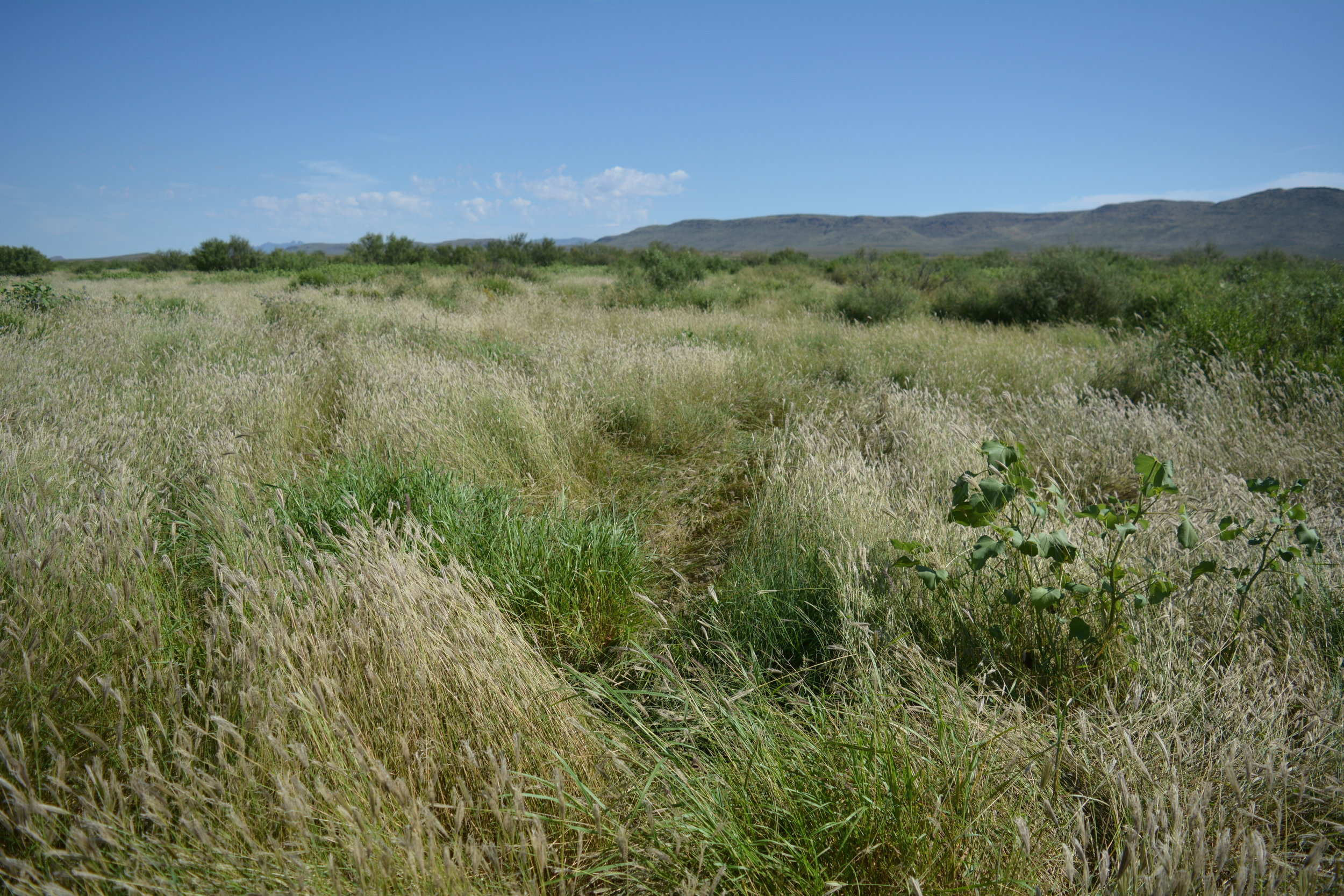 Grazed this pasture 6 times in 1 year