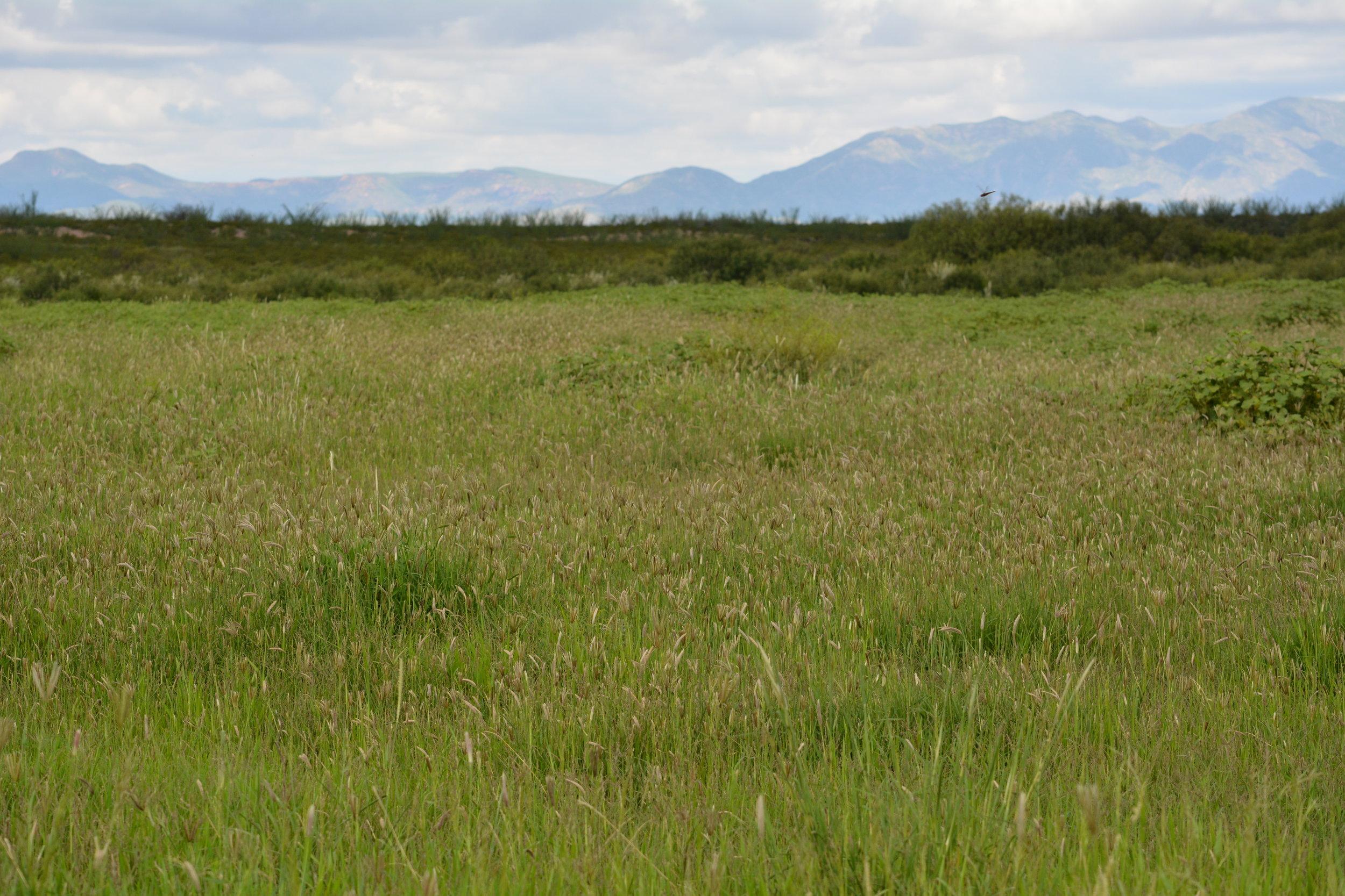 Healthy grasslands establishing