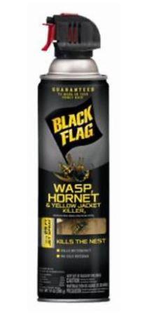 Black Flag Wasp_July.JPG