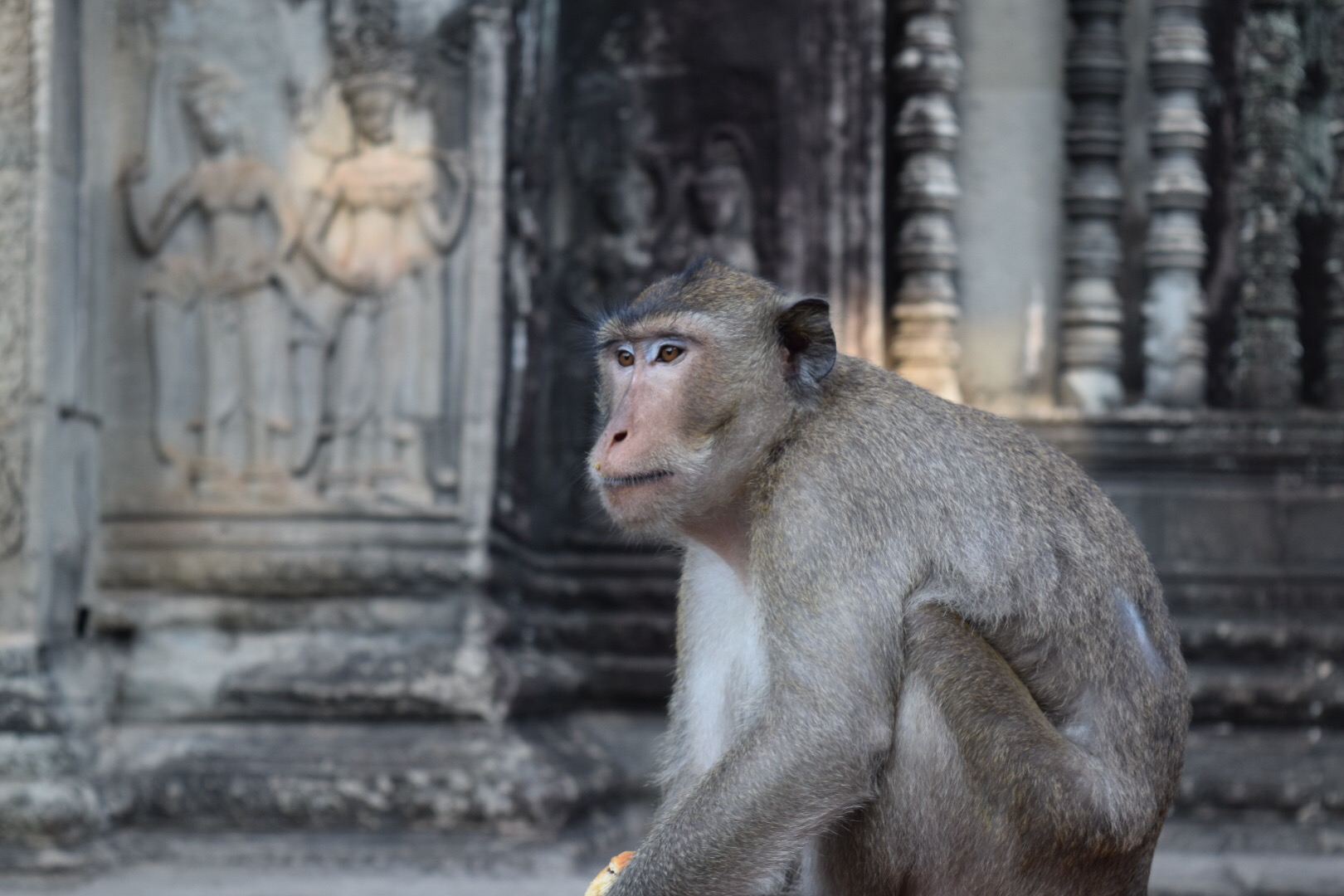 Easter weekend in a Hindu/Buddhist temple. It's hard even for an Angkor Wat monkey to comprehend.