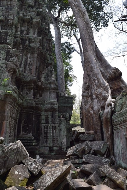 """The jungle temple of Ta Prohm, better known to many as the set of Angelina Jolie's film """"Lara Croft, Tomb Raider."""" (No, we have not seen the film.)"""