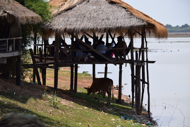 A roadside restaurant, complete with hammocks, cows, and a great view of the Tonle Sap River.