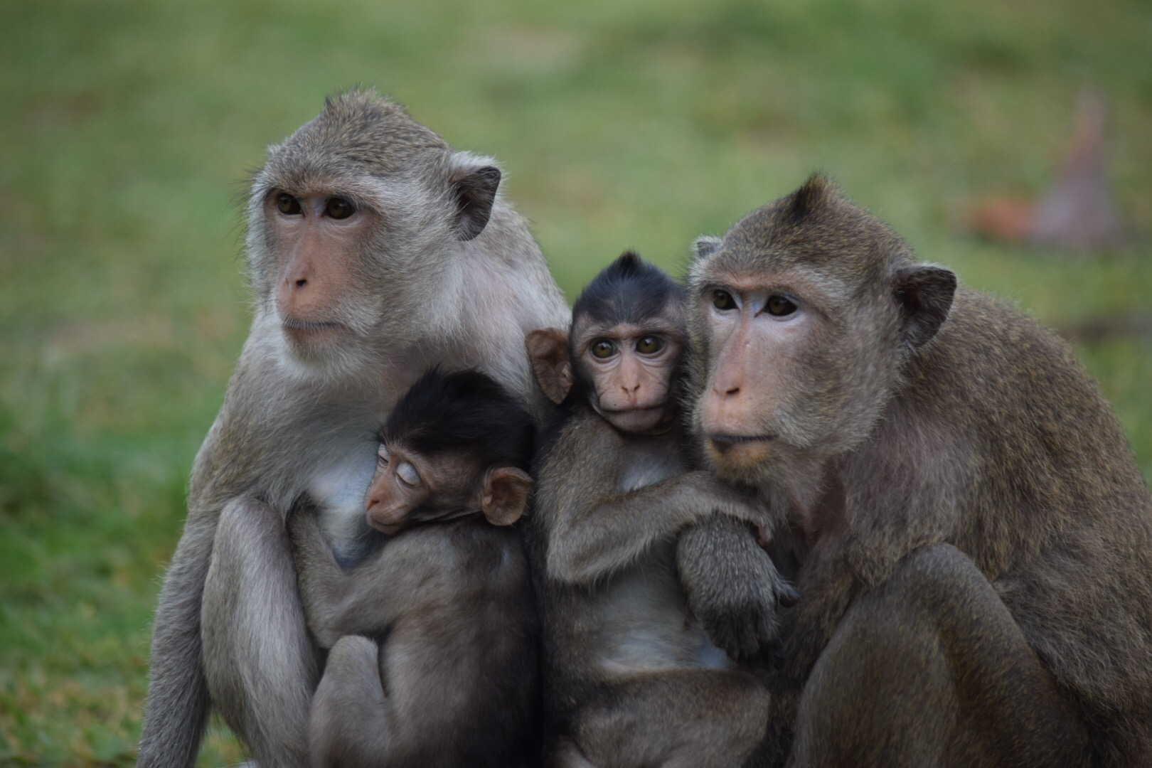This Angkor Wat monkey family saw my camera and immediately gathered together to pose for a picture.  (If only our kids could take a lesson or two on how to do this....)