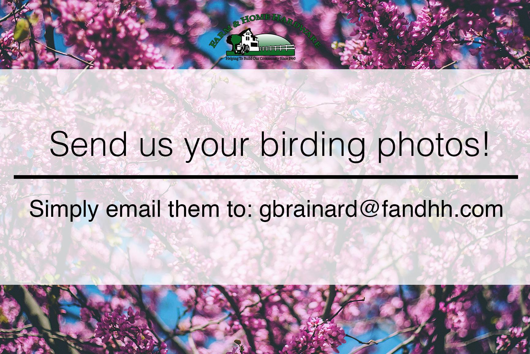 BirdingSubs.jpg