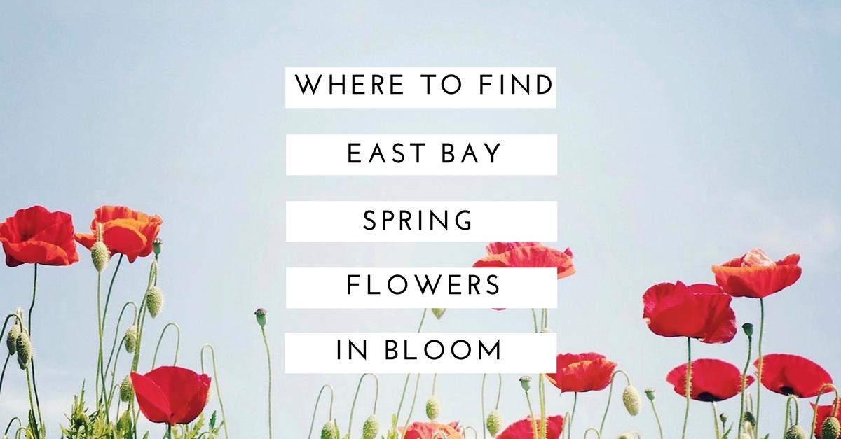 east_bay_flowers_in_bloom.png