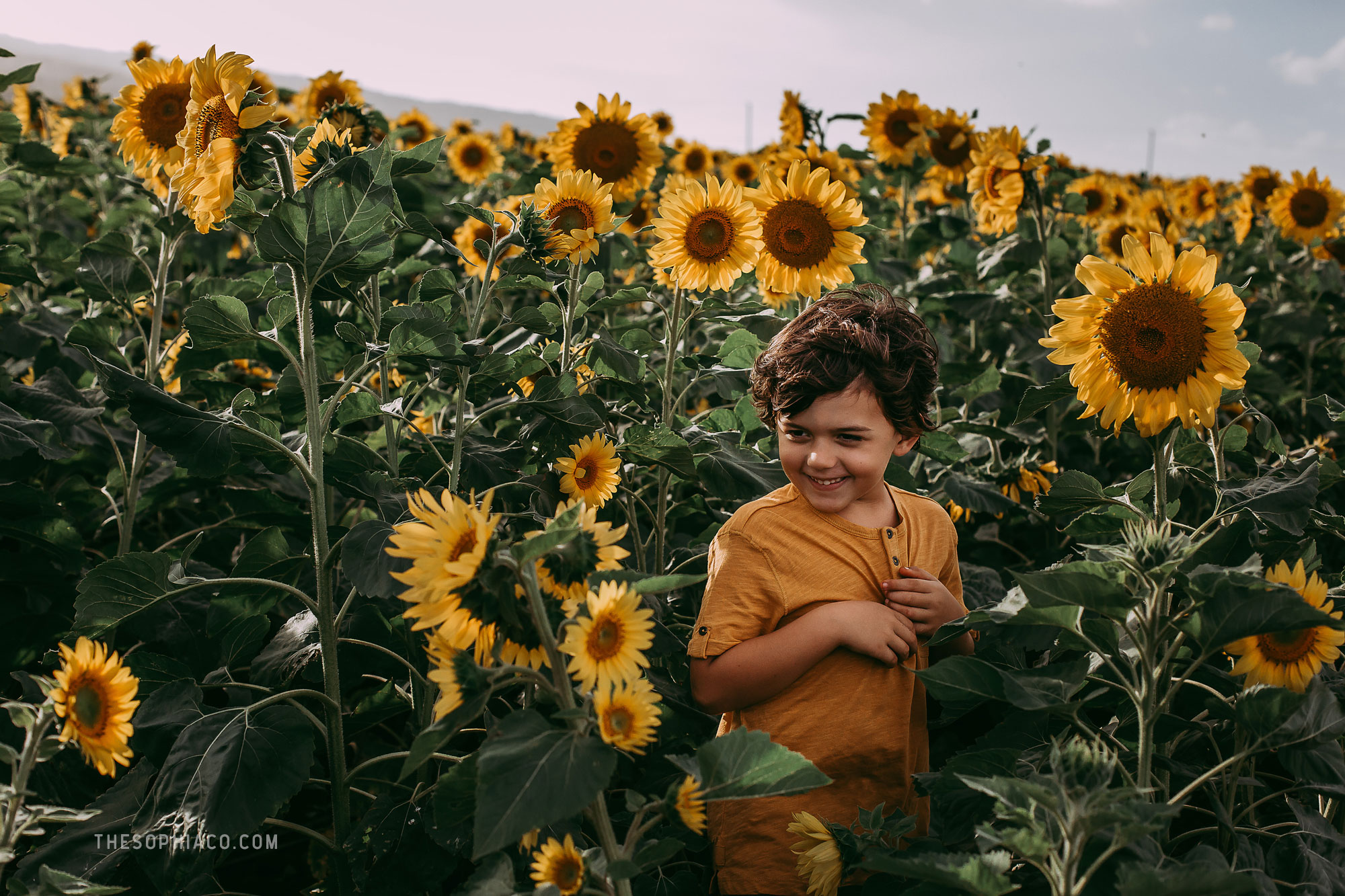 waialua-sunflowers-oahu-family-photography-08.jpg