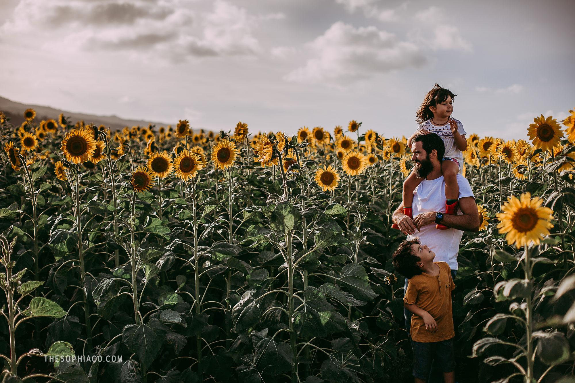 waialua-sunflowers-oahu-family-photography-10.jpg