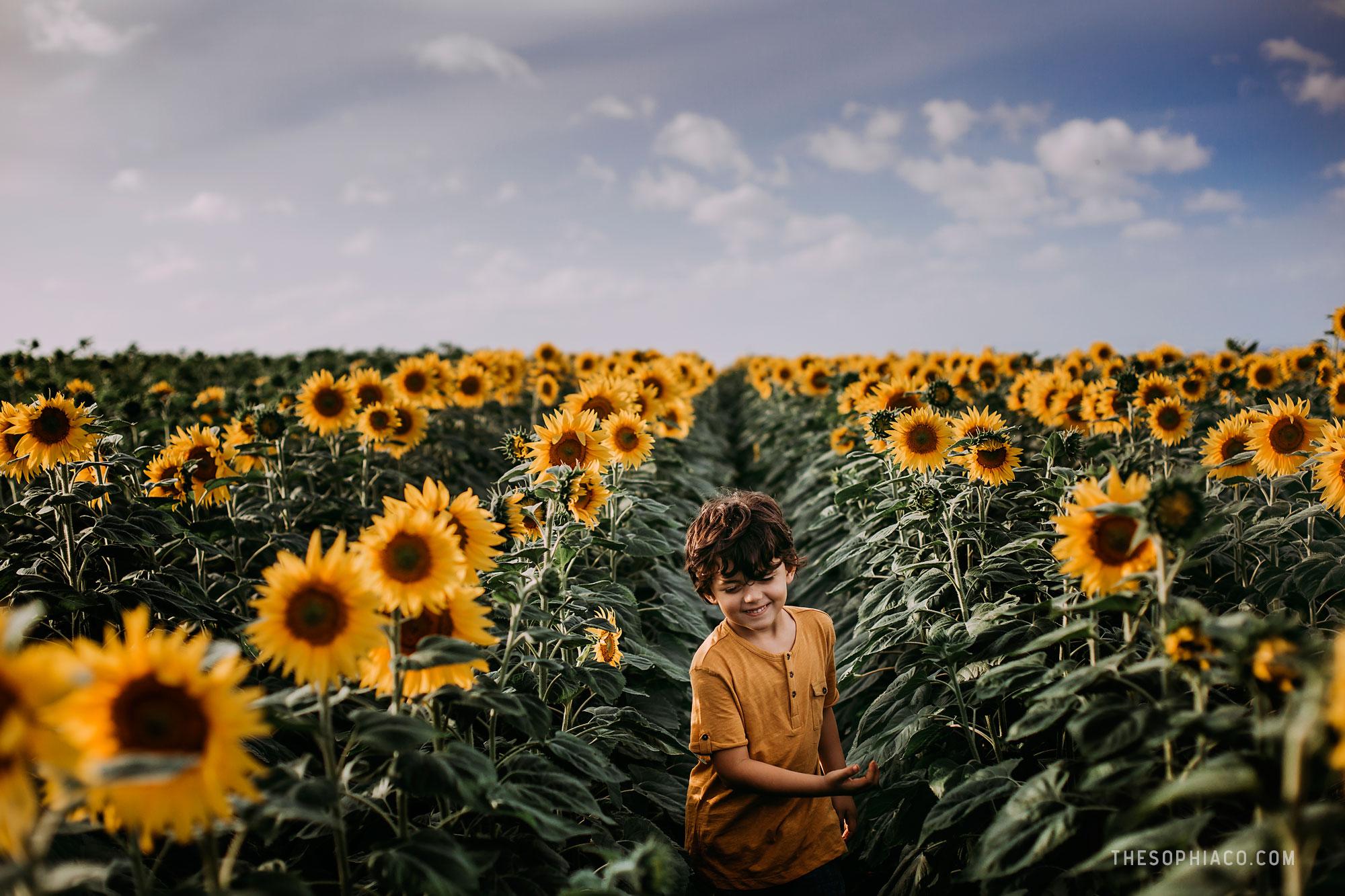 waialua-sunflowers-oahu-family-photography-14.jpg