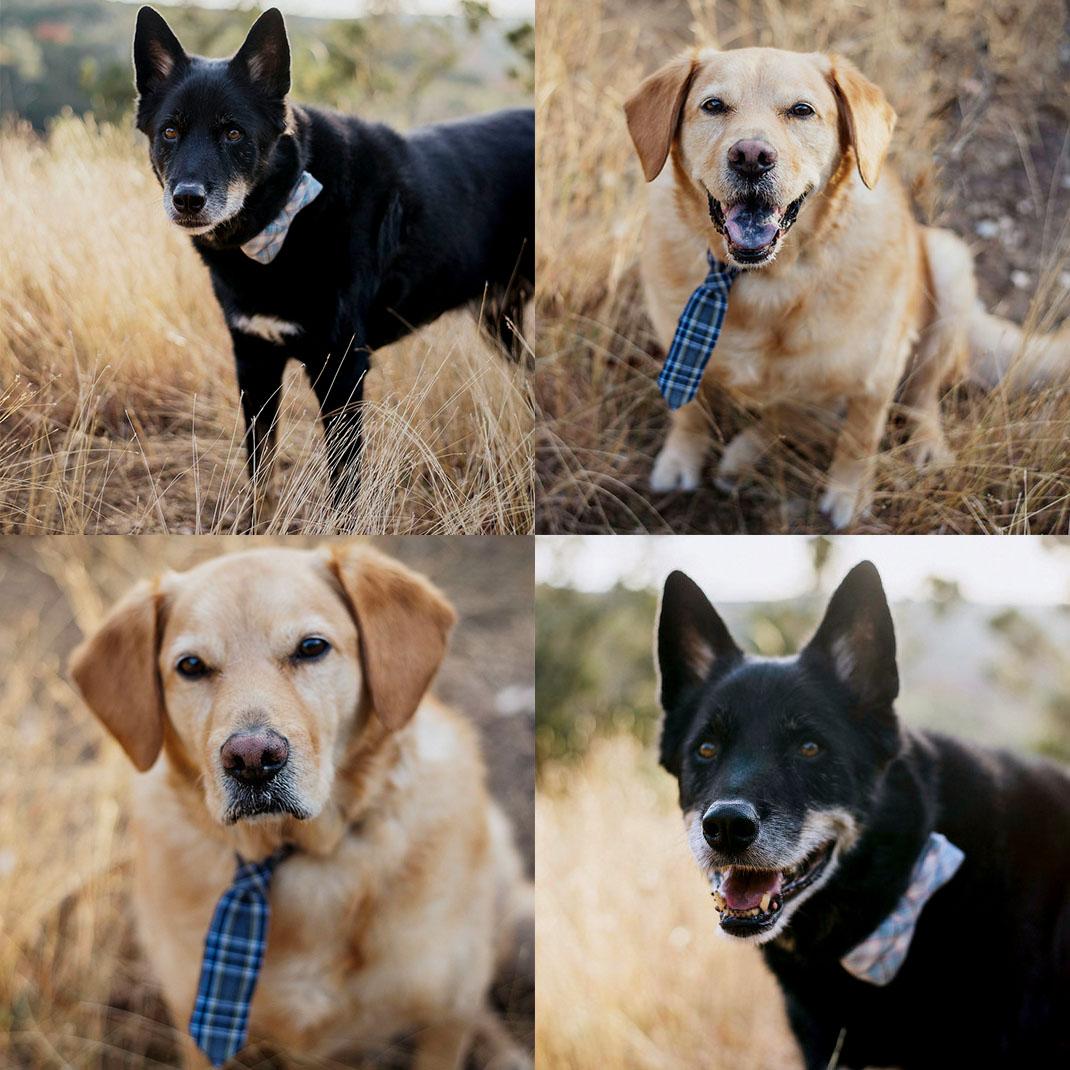 EffJay Photography Kansas City Dog Photographer Family Pictures Fur Babies 006.jpg