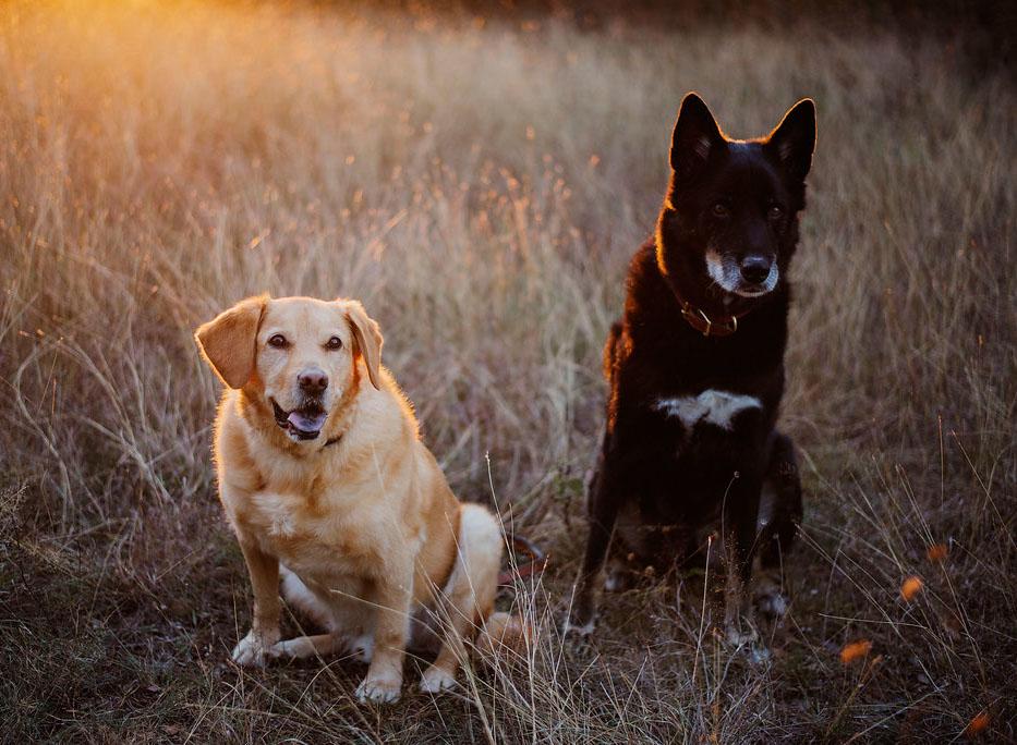 EffJay Photography Kansas City Dog Photographer Family Pictures Fur Babies 014.jpg