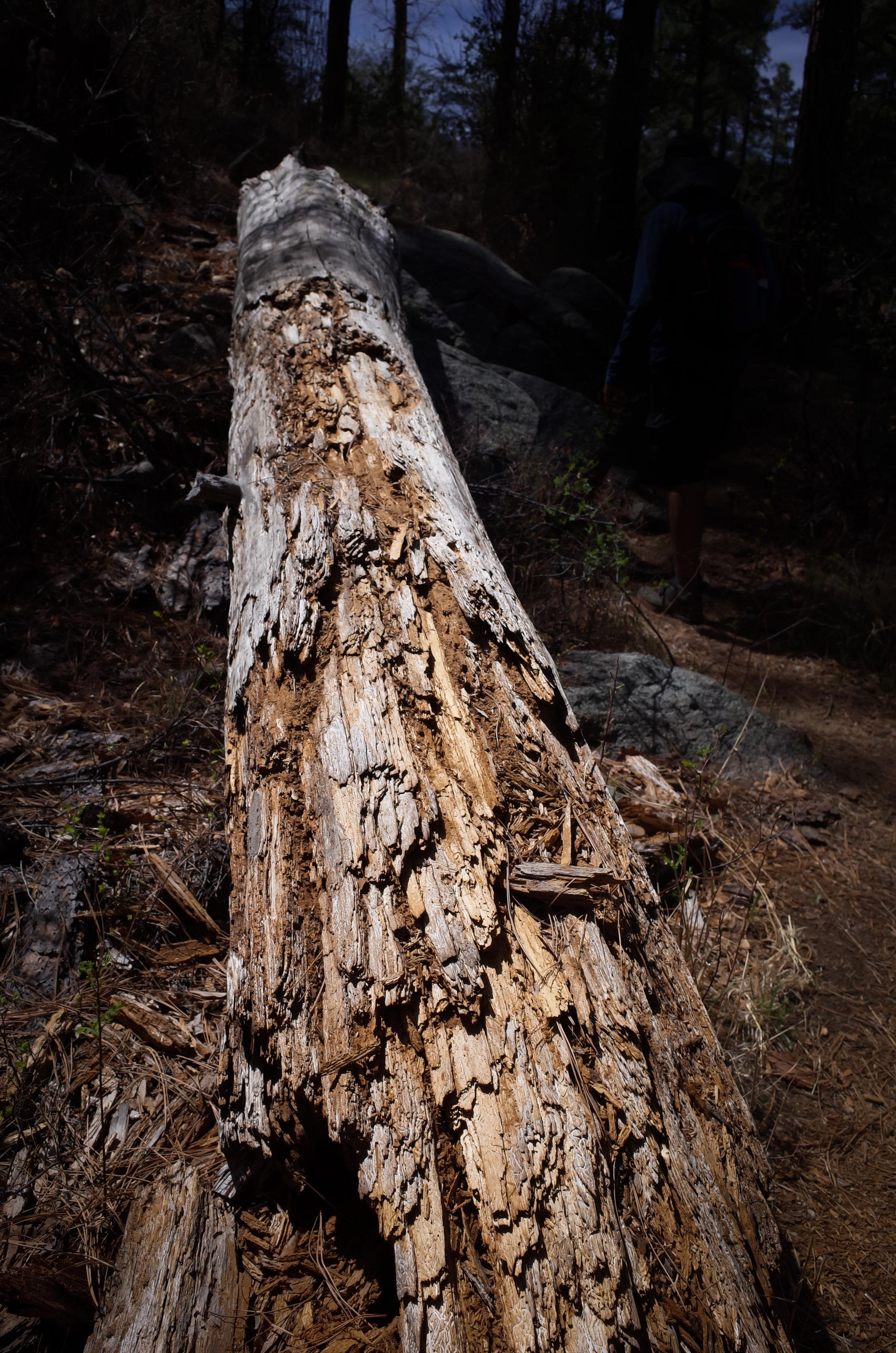 Wolf Creek Falls 6 - Jia Oak Baker.jpg