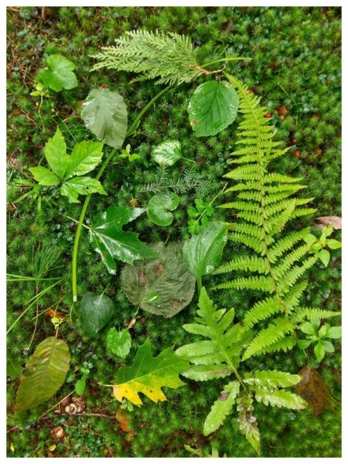 leaf collection 2.jpg