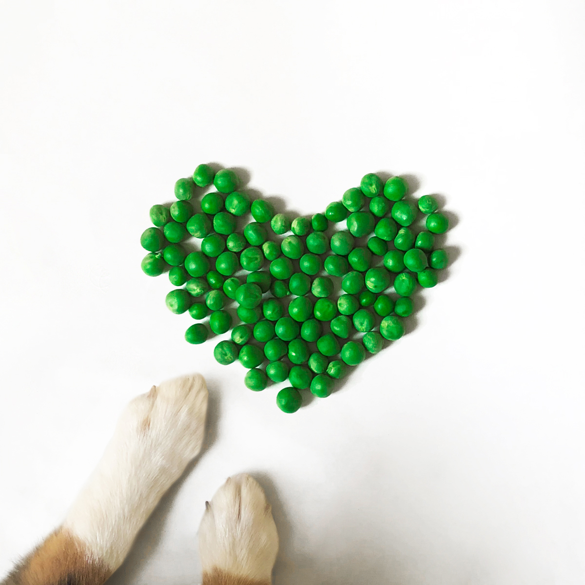 PUP-05May-Shape-Heart.jpg