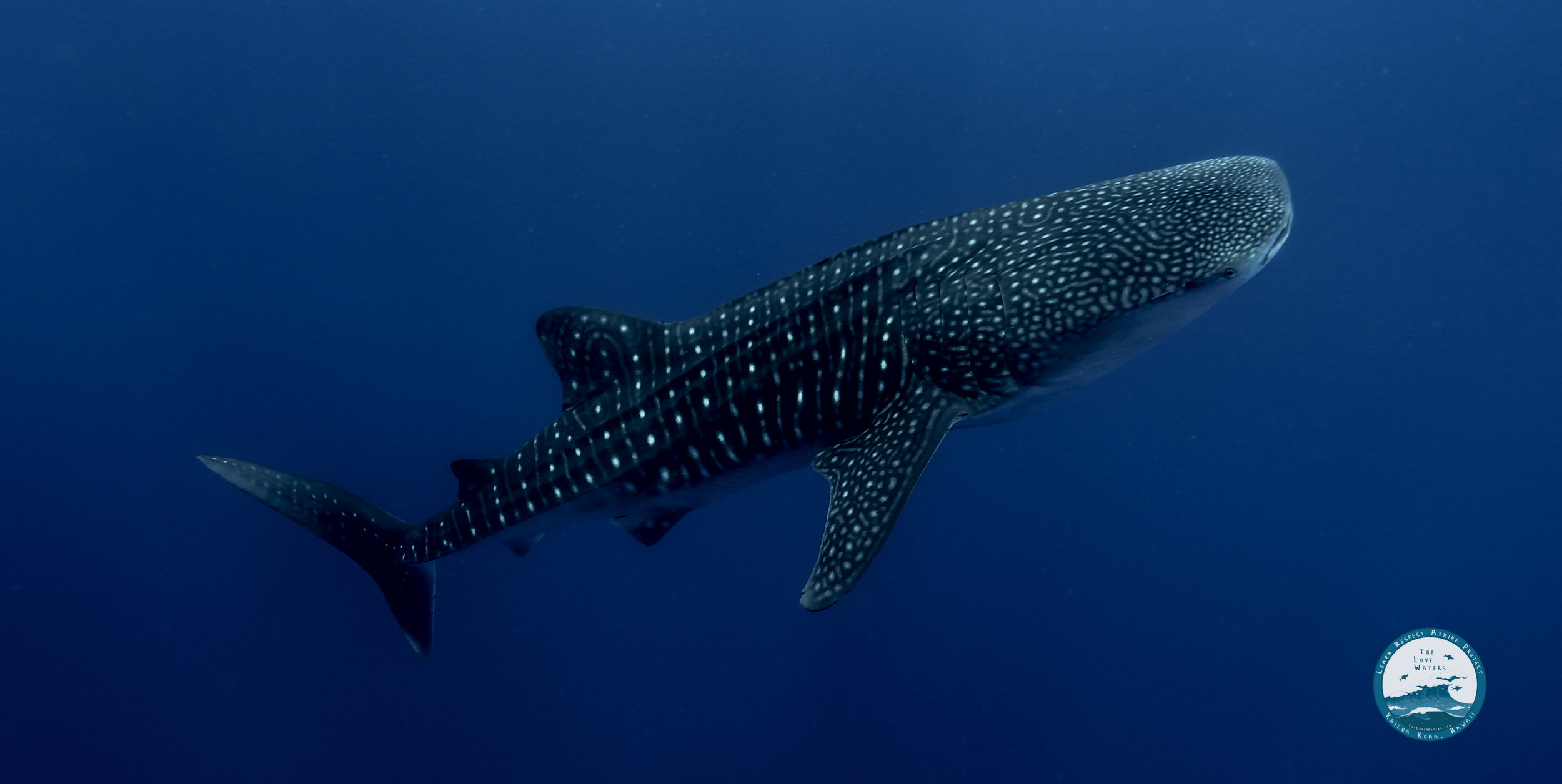 whaleshark2.jpg
