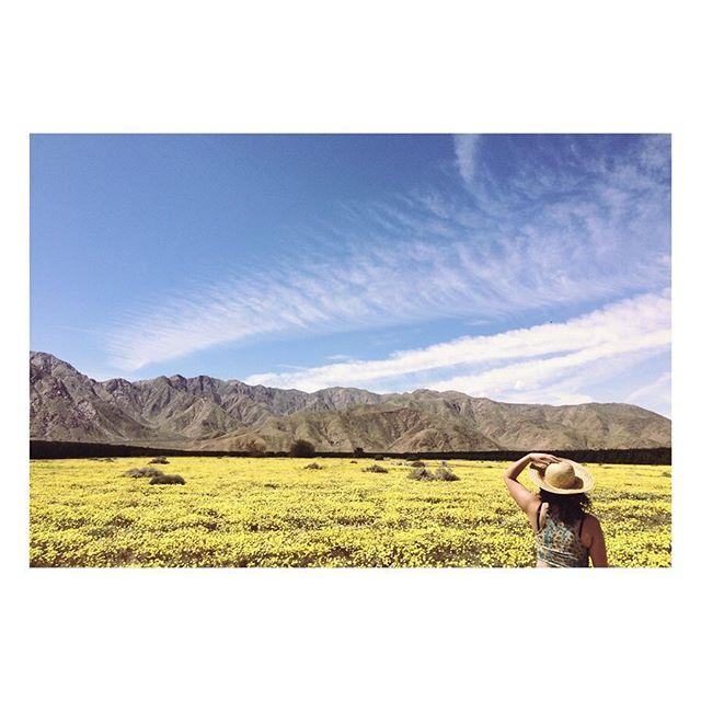 desert spring 🌼🌵