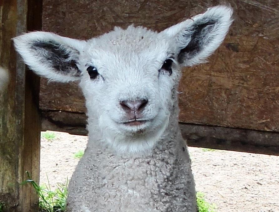 wool in a basket.jpg