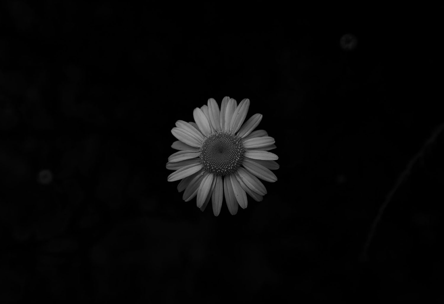 I named this image before I read that about Wendy Whelan, but it was exactly what I feel this flower was saying to me.