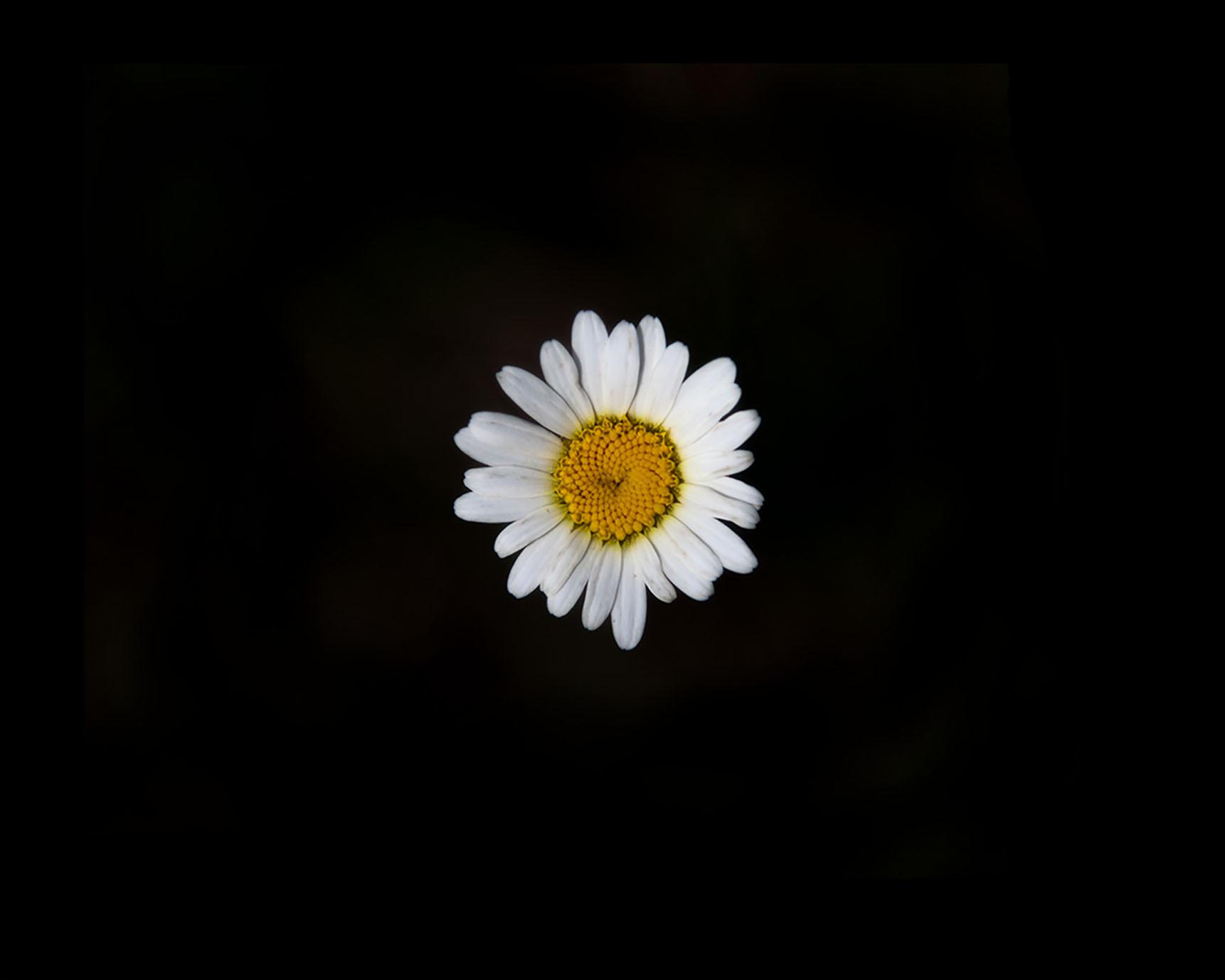 f1-8633.jpg
