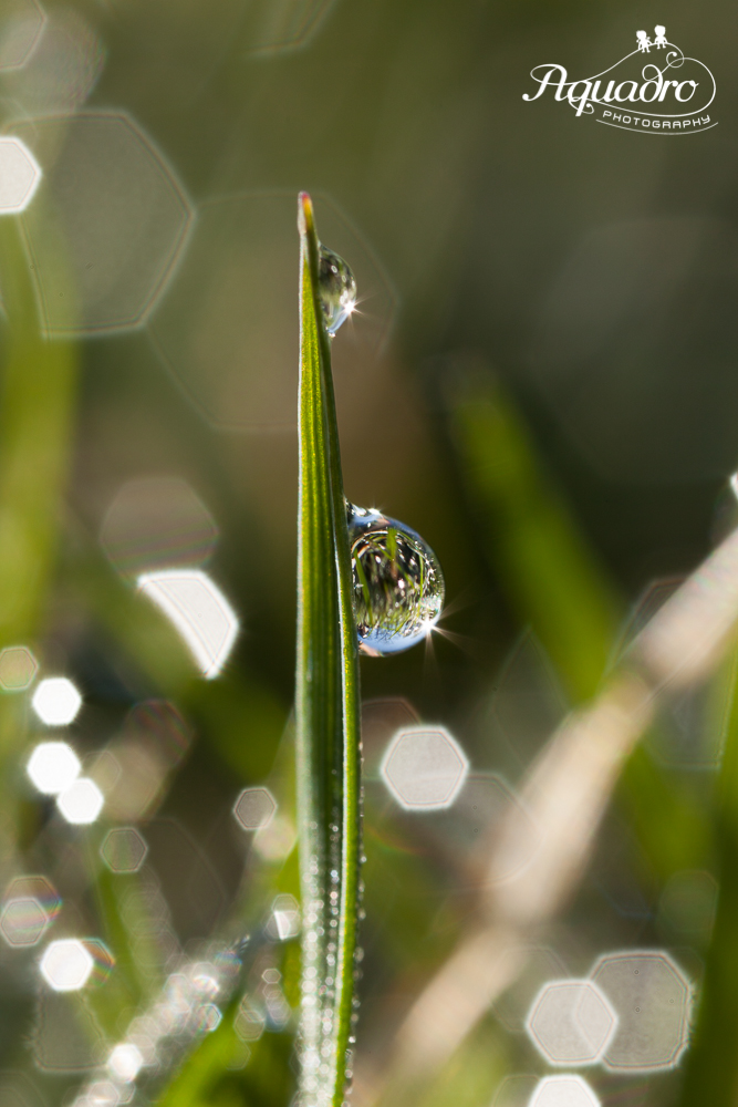 two drops of dew