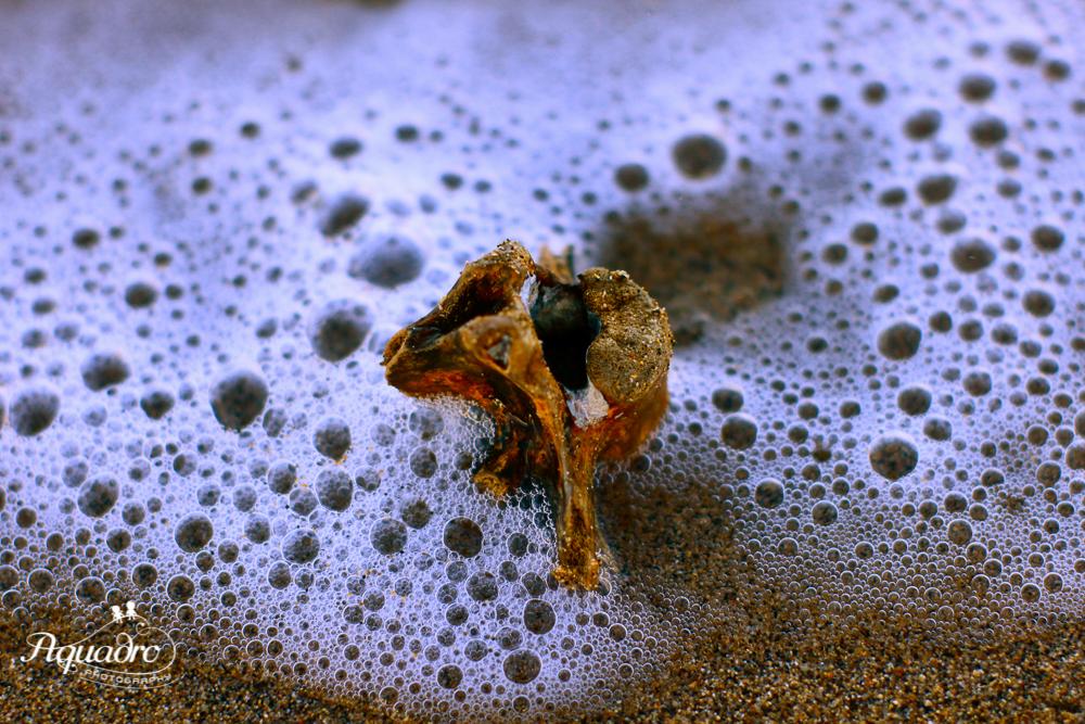 Bone in Sand