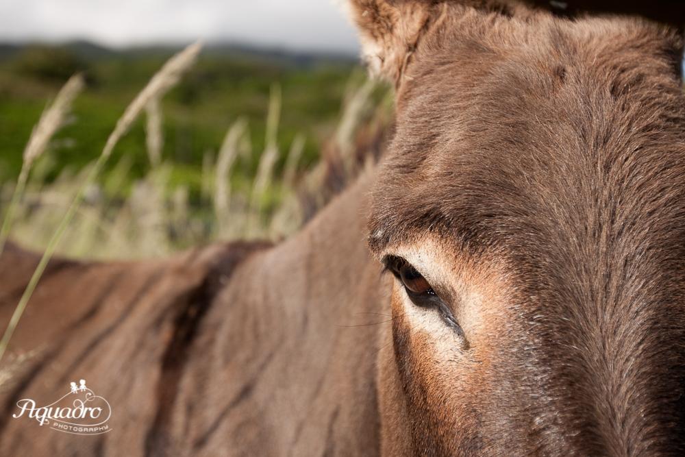 Donkey Hello