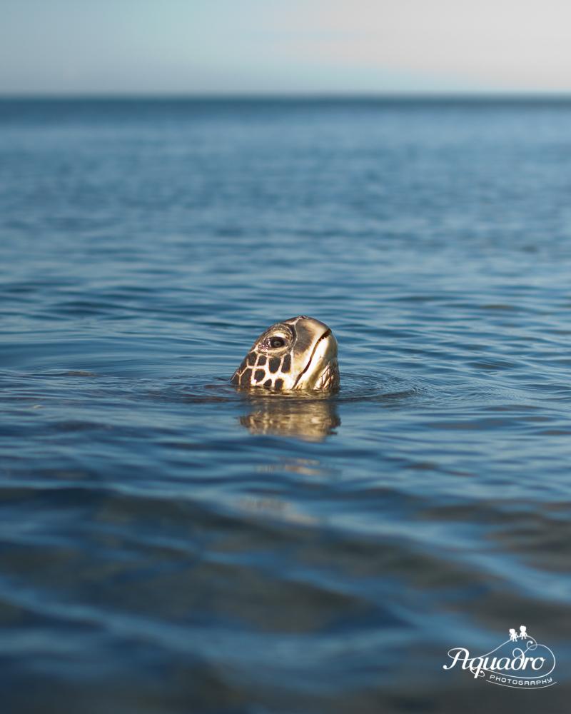 Sea Turtle says hello