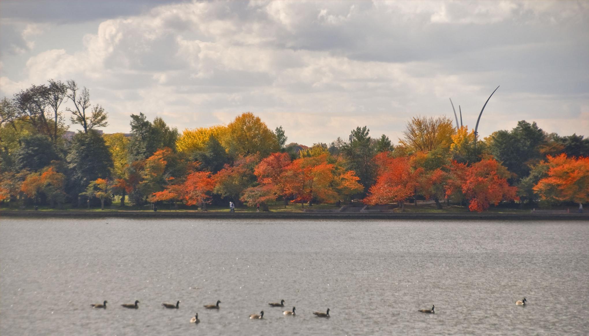 Autumnal landscape, Washington DC.  Image (CC) Ron Cogswell