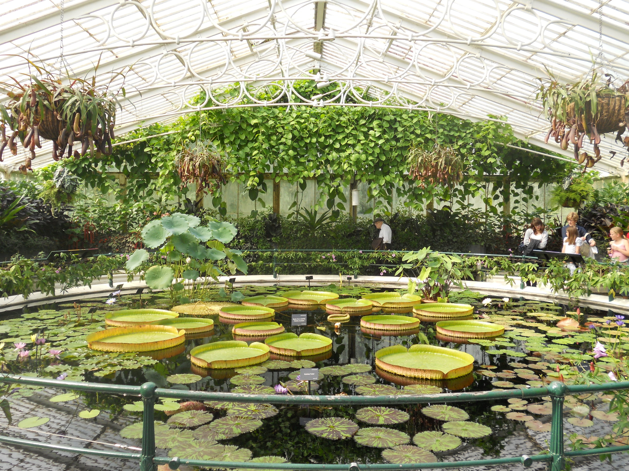Water Lilly House, Kew, UK. Image Tim Entwisle