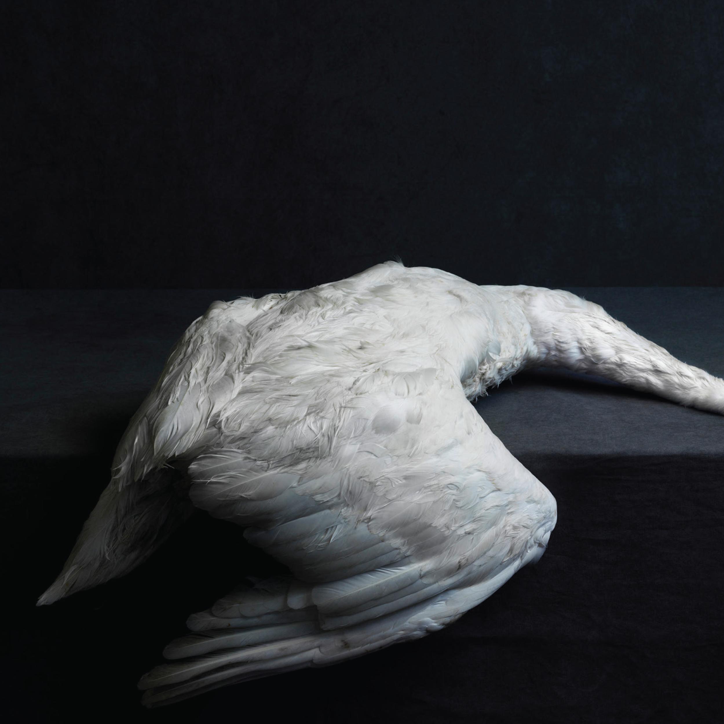 Cover art by Stephan Vanfleteren