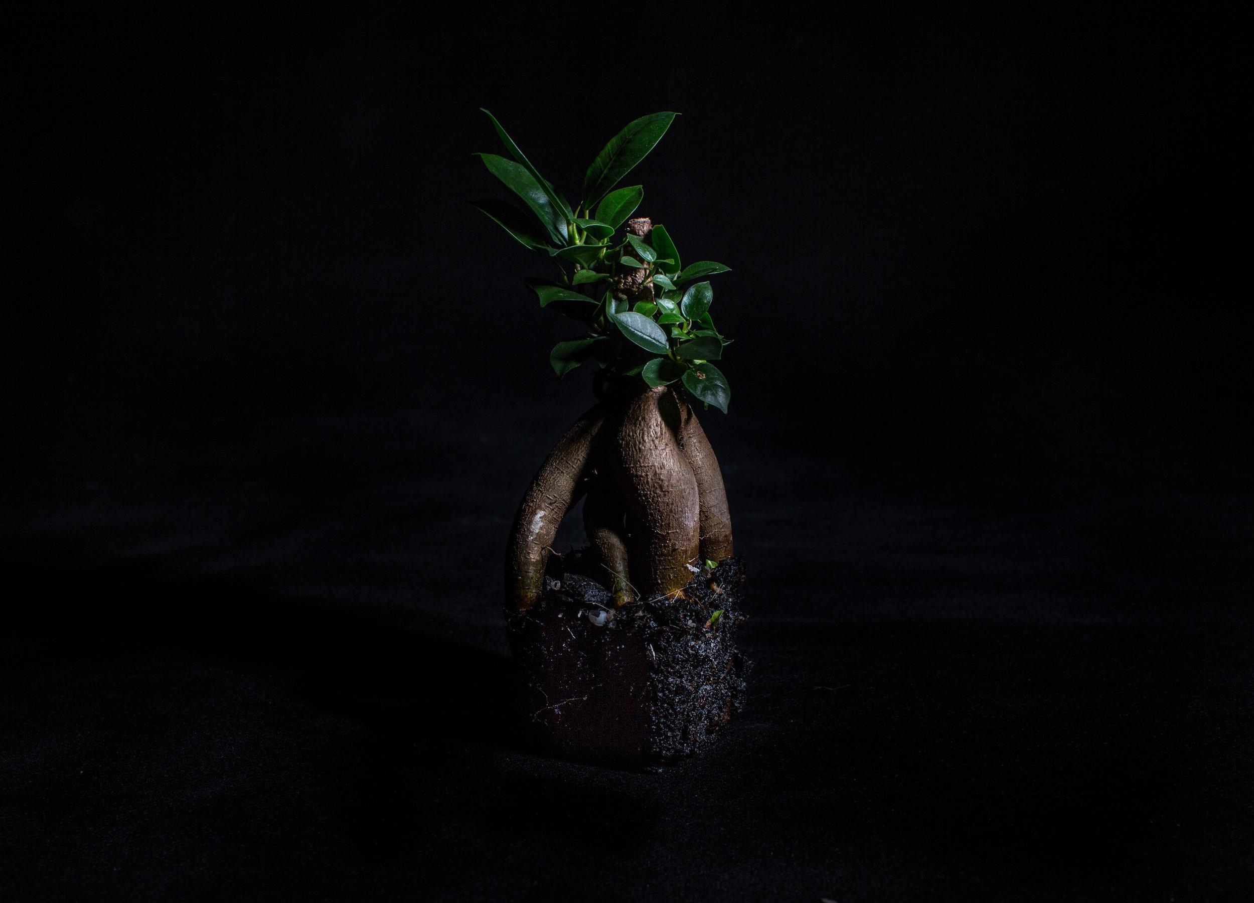 portfolio - still life-1.jpg