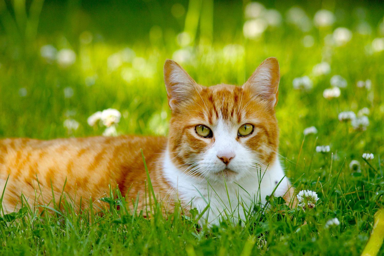 cat_in_grass.jpg