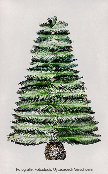 Palm Christmas Tree