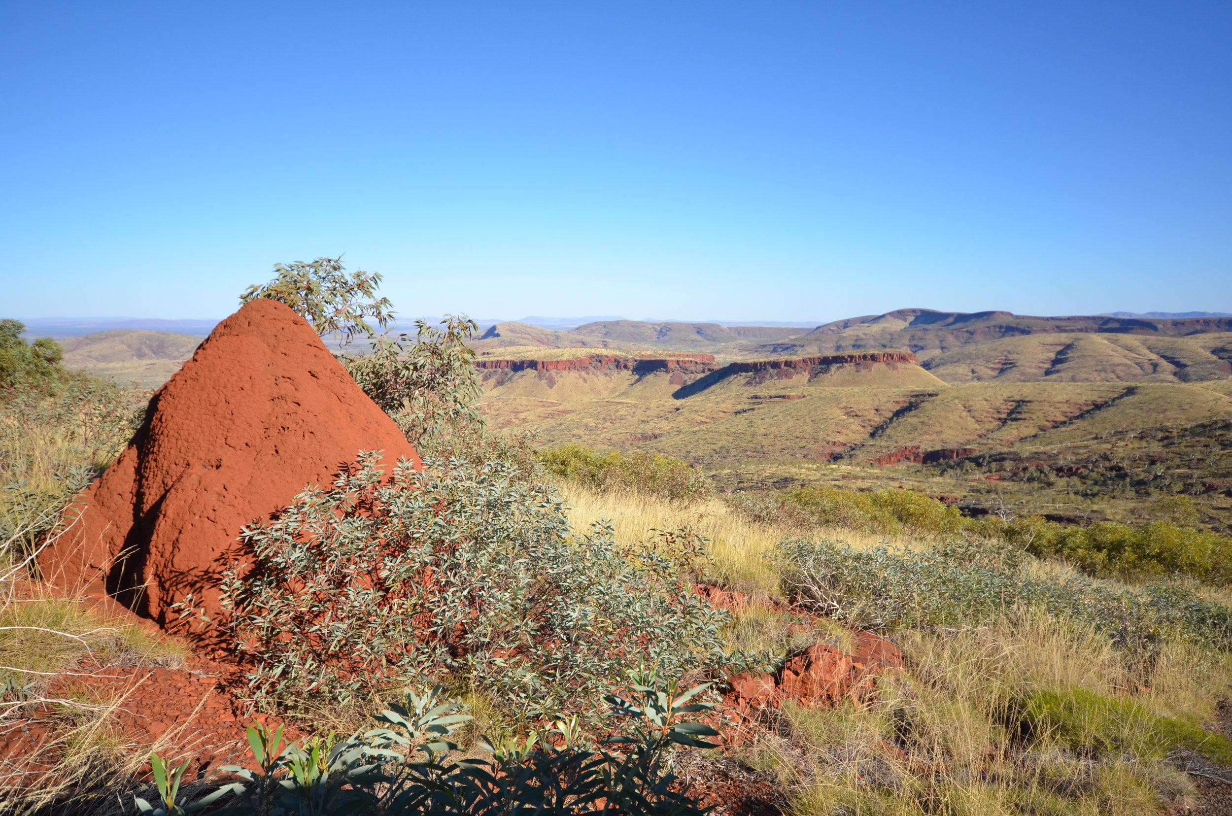 Termite mounds bigger than a Landcruiser
