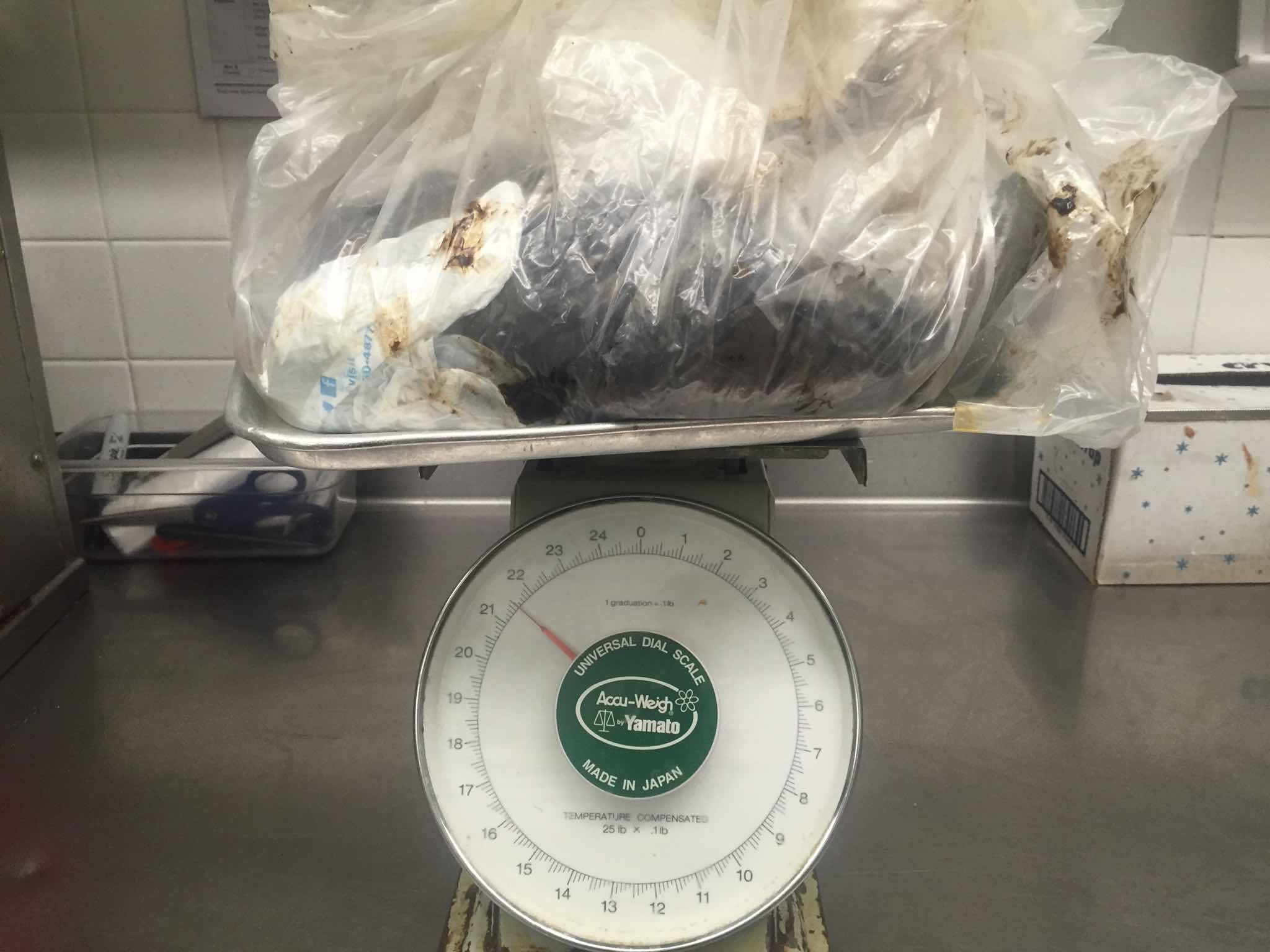 22 lb. Removal from a hood