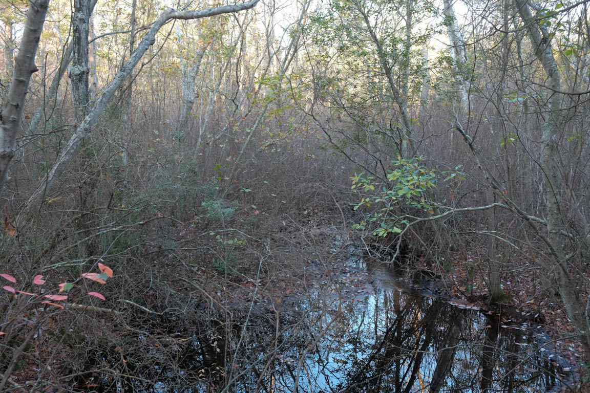 Old cranberry bogs adjacent to Steelmantown Cemetery natural burial ground in New Jersey.  photo by Tom Bailey