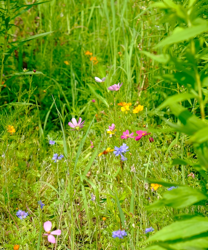 Kateri Meadow Natural Burial Preserve--no stone, just different flowers mark a grave.